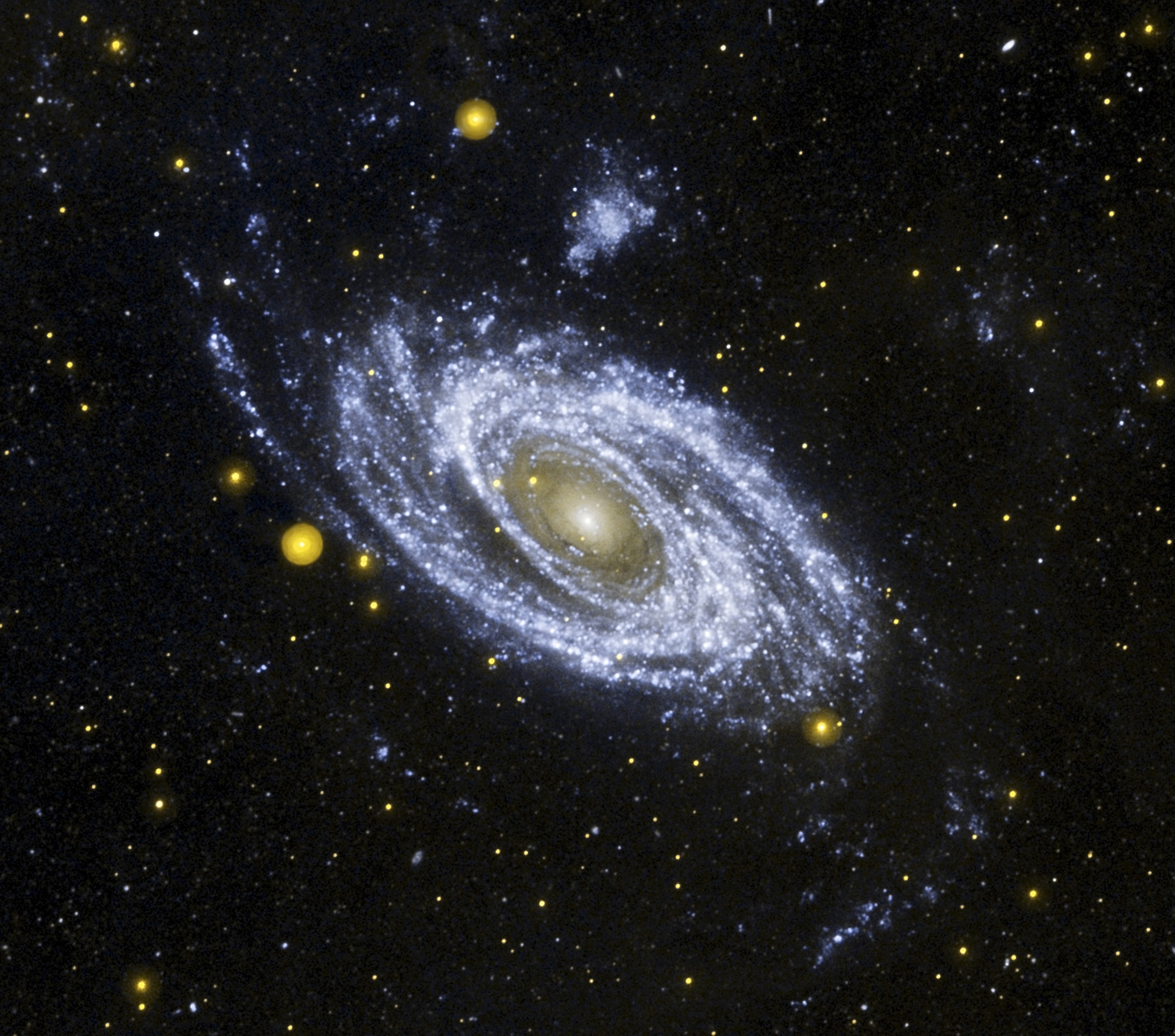Astronomers used the Galaxy Evolution Explorer (GALEX) telescope to take this deep image in ultraviolet light of the sprawling spiral galaxy M81, hoping to learn where it kept its hot stars